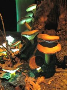 bioluminescent Mushrooms Fungi