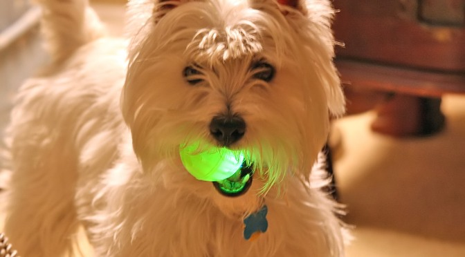Fun Toys for Your Dog & You