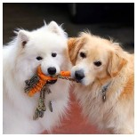 Great Toys for Your Dog