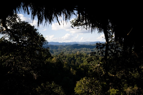 Laos Treehouse Hotel 2