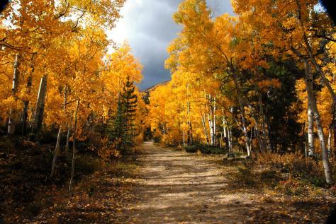 Worlds' Oldest Trees Organism