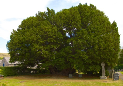Worlds' Oldest Trees