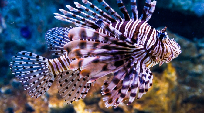 cool aquarium fish picture gallery cool notion quest