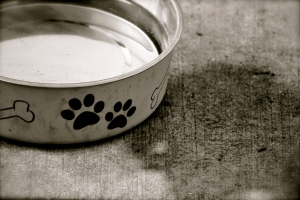 pet water dish
