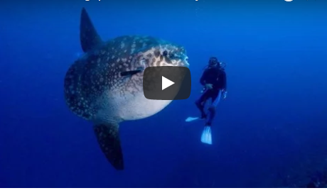 Giant Ocean Creatures Documentary Video