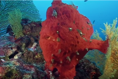 Stunning Marine Life Documentary Video